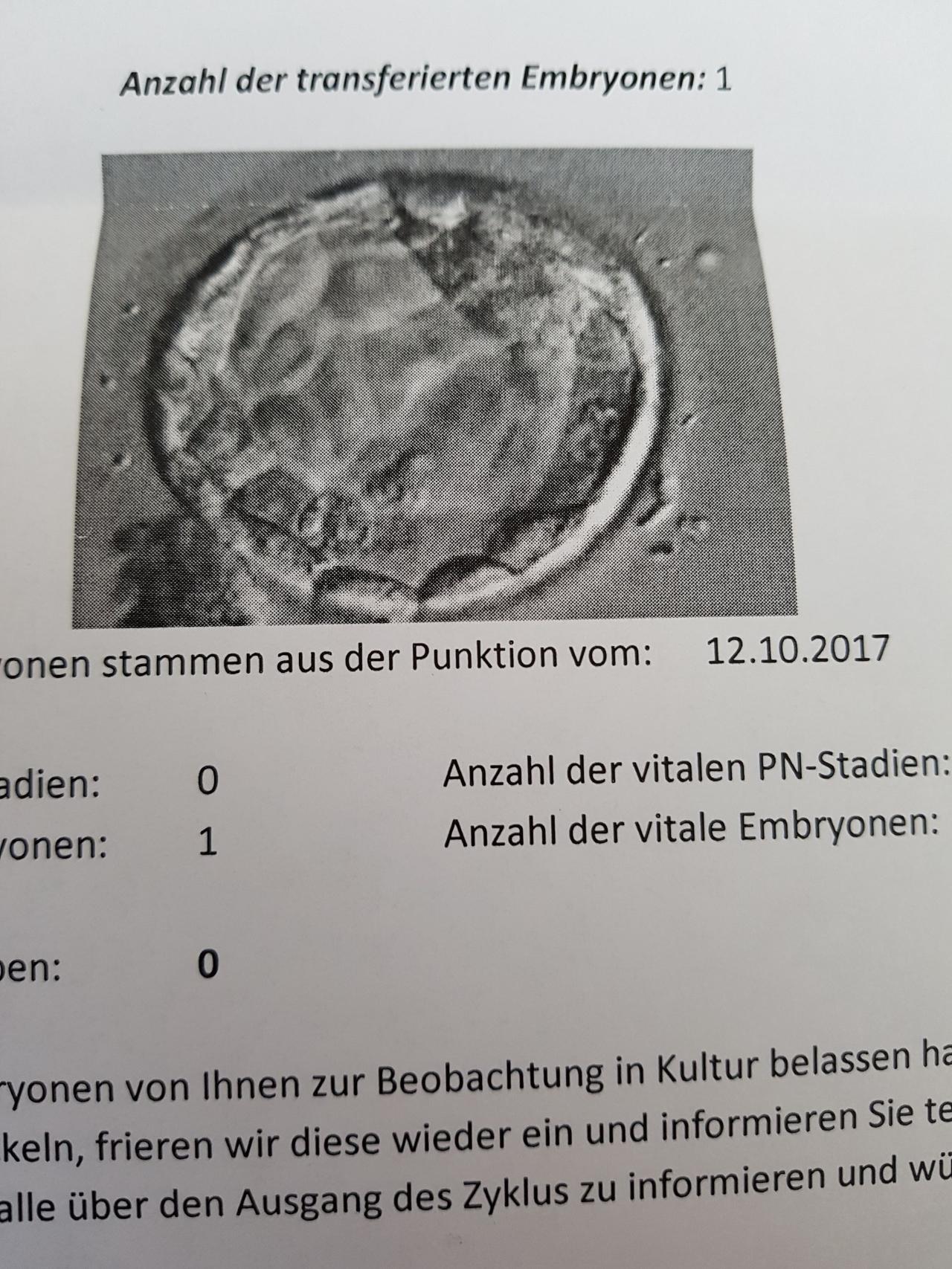 Schlüpfende Blastozyste