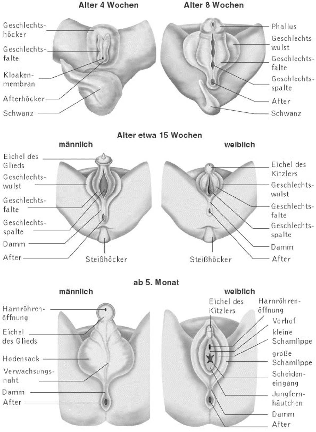 Gait plate orthotics